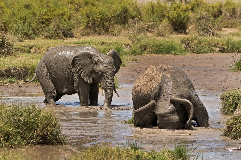 large_Elephant_Mudbath_4.jpg