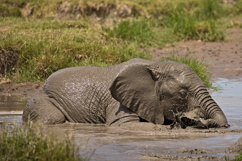 large_Elephant_Mudbath_6.jpg