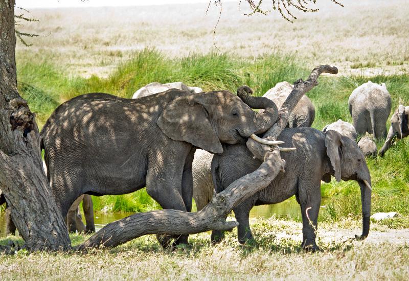 large_Elephant_Traffic_Jam_2.jpg