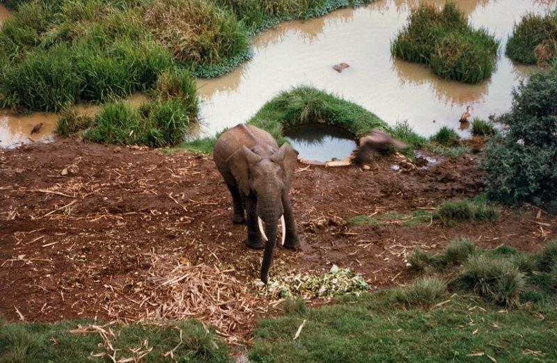 large_Elephant_a..____057__1_.jpg