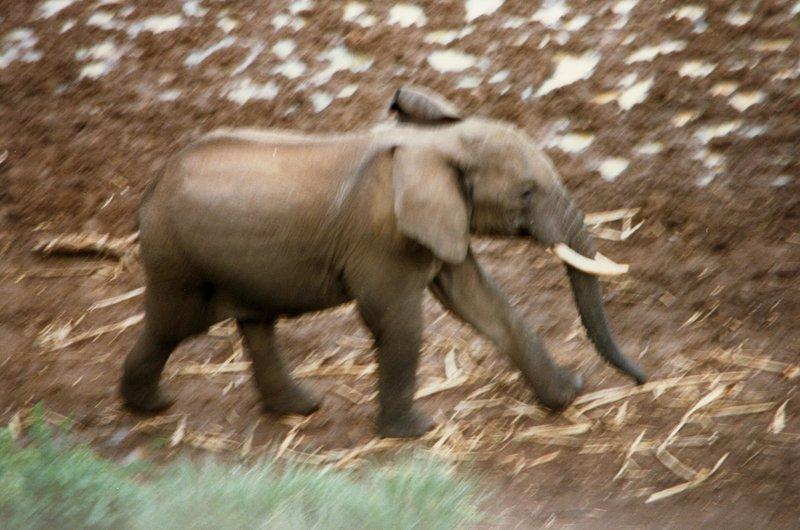 large_Elephant_a..____057__2_.jpg