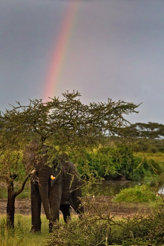 large_Elephant_and_Rainbow_11-1.jpg
