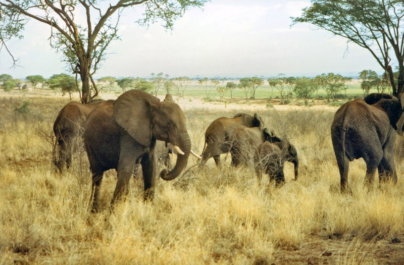 large_Elephants_..rk______110.jpg