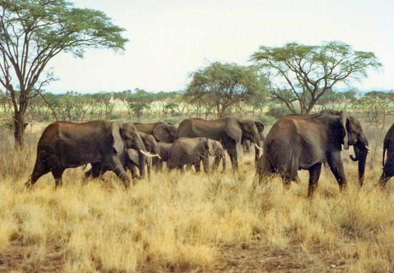 large_Elephants_..rk______113.jpg
