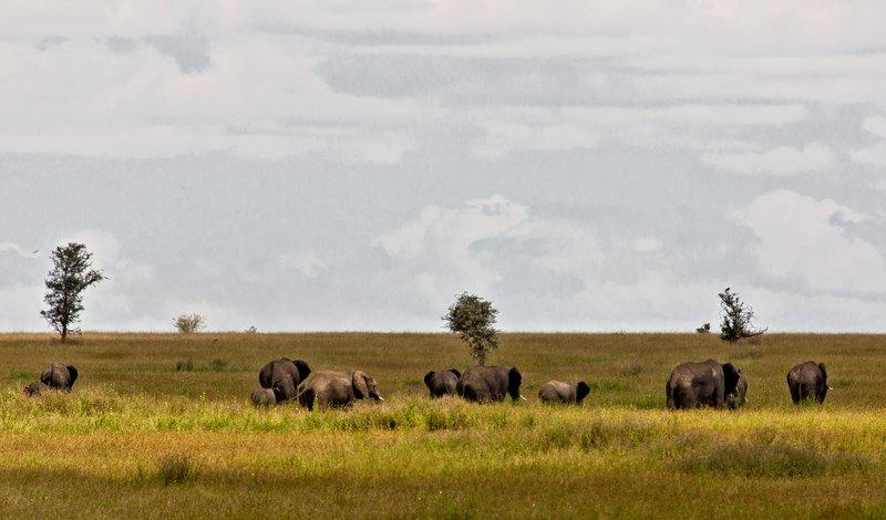 large_Elephants_10-1.jpg