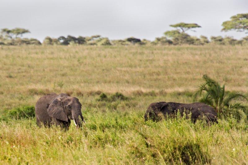 large_Elephants_10-201.jpg