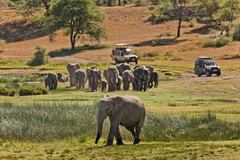 large_Elephants_104.jpg