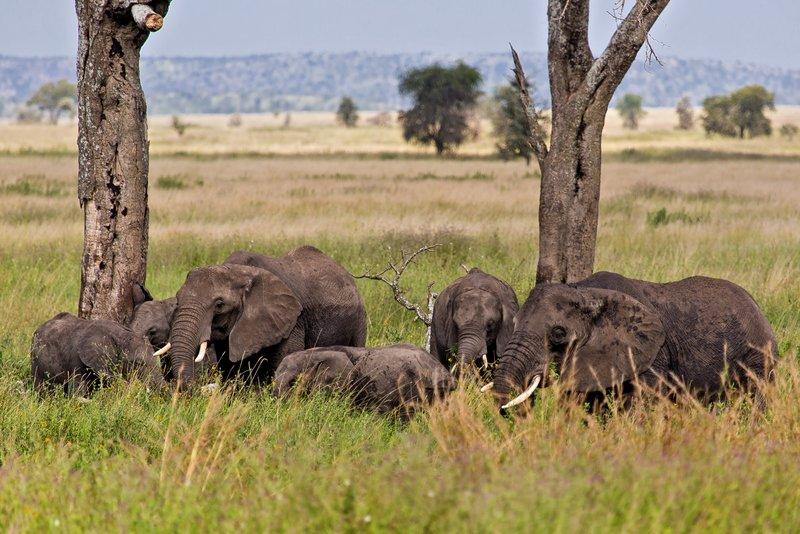 large_Elephants_11-22.jpg
