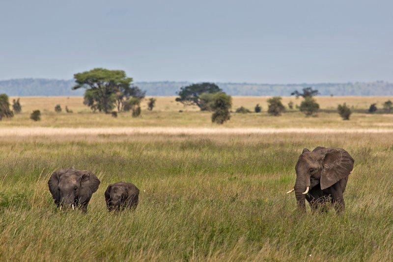 large_Elephants_11-3.jpg