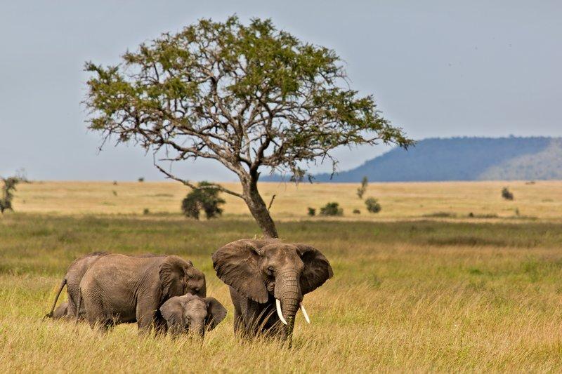 large_Elephants_11-30.jpg