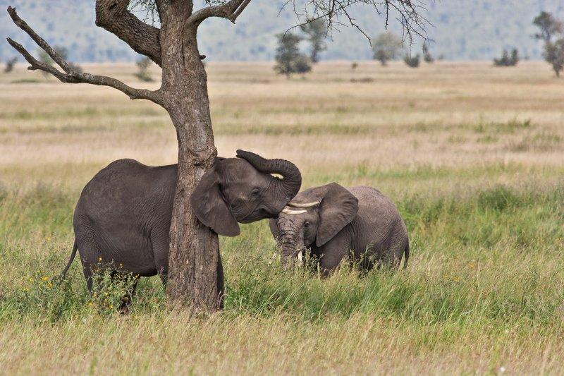 large_Elephants_11-32.jpg