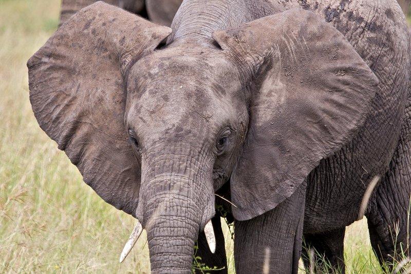 large_Elephants_11-42.jpg