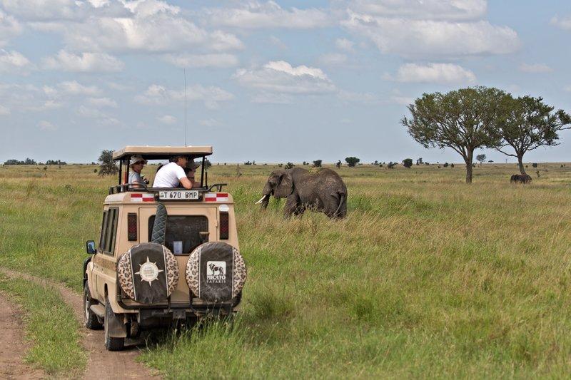 large_Elephants_11-43.jpg