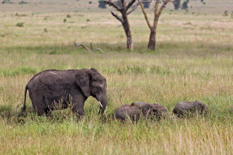 large_Elephants_11-45.jpg