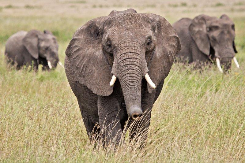 large_Elephants_11-47.jpg