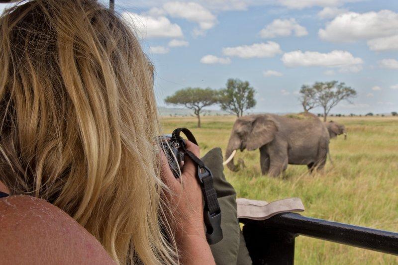 large_Elephants_11-503.jpg