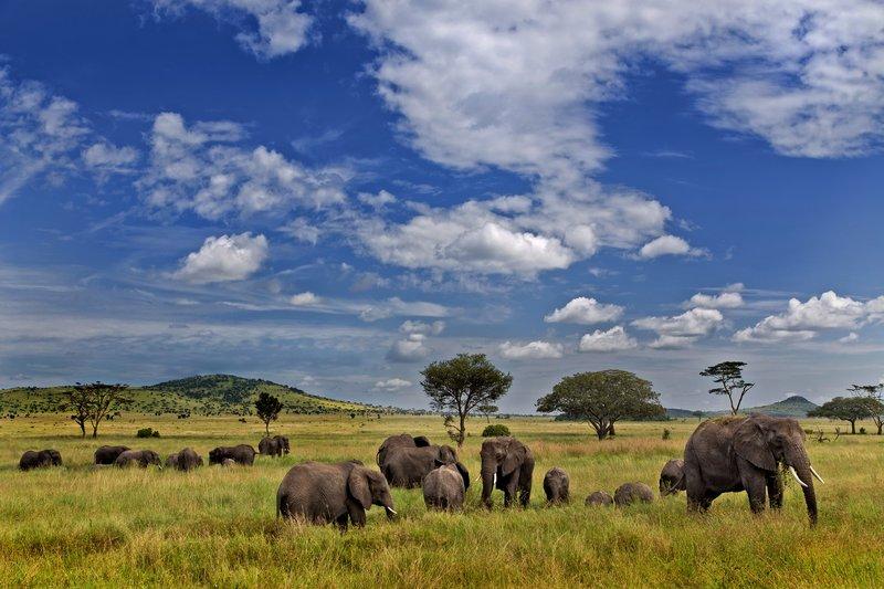 large_Elephants_11-505.jpg