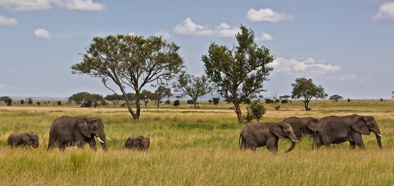 large_Elephants_11-51.jpg
