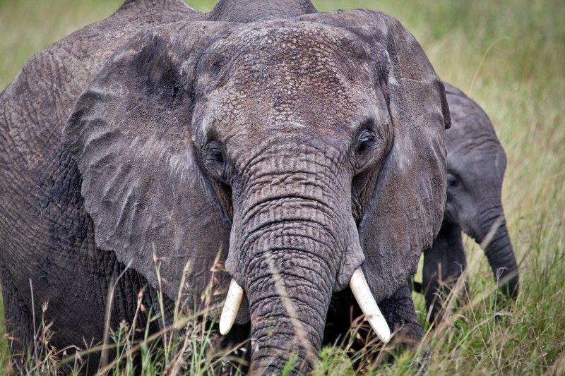 large_Elephants_11-56.jpg