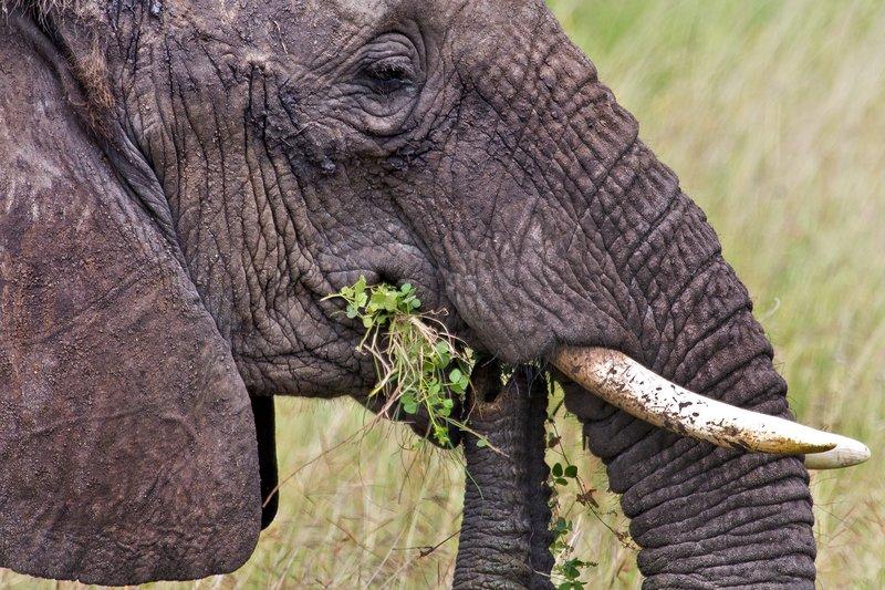 large_Elephants_11-59.jpg