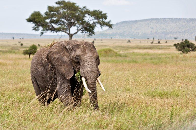 large_Elephants_11-64.jpg