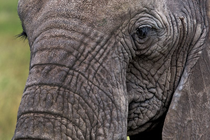 large_Elephants_11-67.jpg
