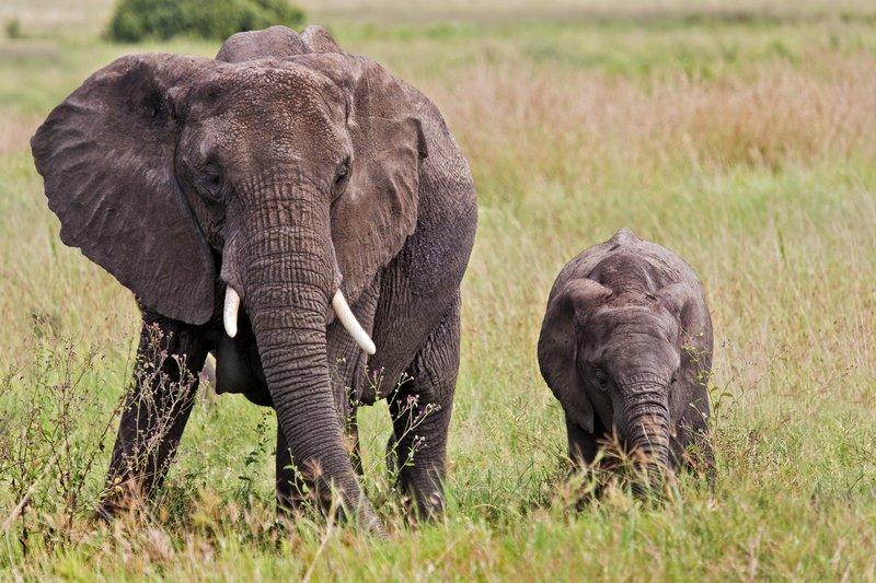 large_Elephants_11-69.jpg