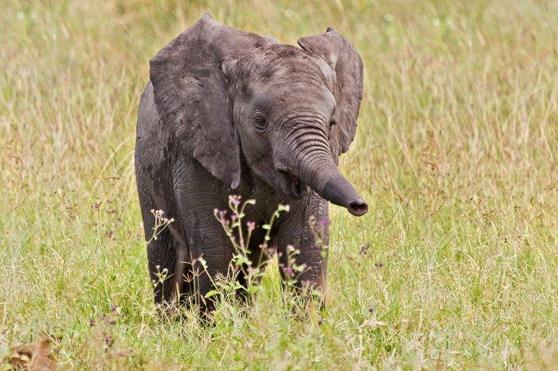 large_Elephants_11-70.jpg