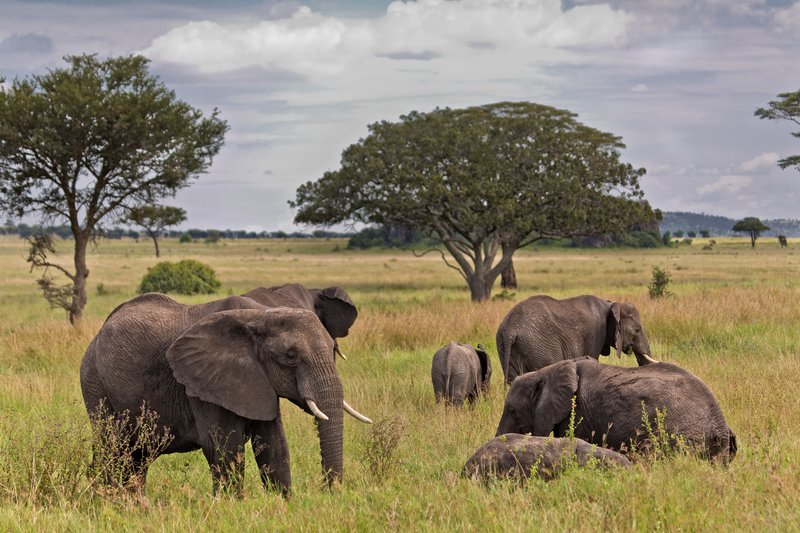 large_Elephants_11-72.jpg
