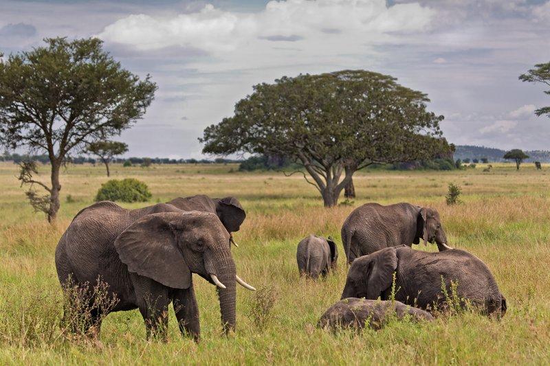 large_Elephants_11-72.jpg