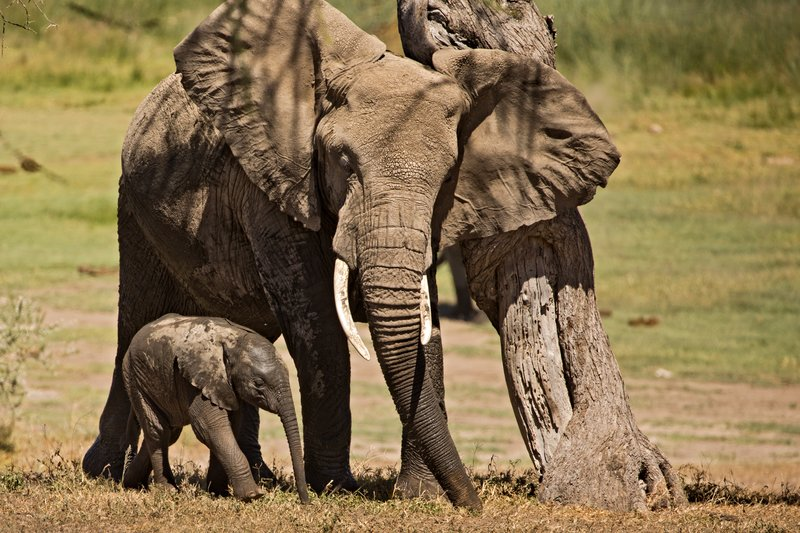 large_Elephants_149.jpg