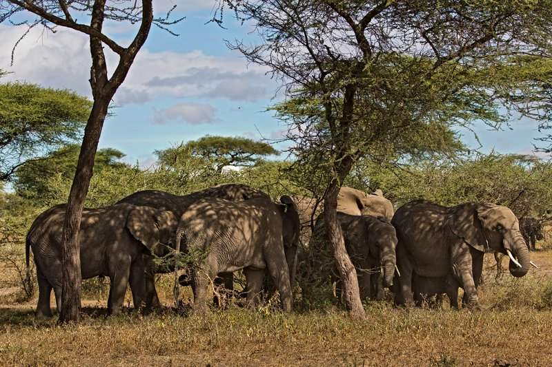 large_Elephants_19.jpg