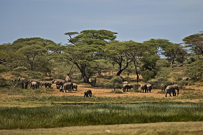 large_Elephants_190.jpg