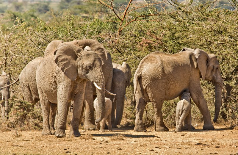 large_Elephants_301.jpg