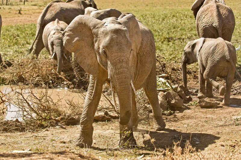 large_Elephants_304.jpg