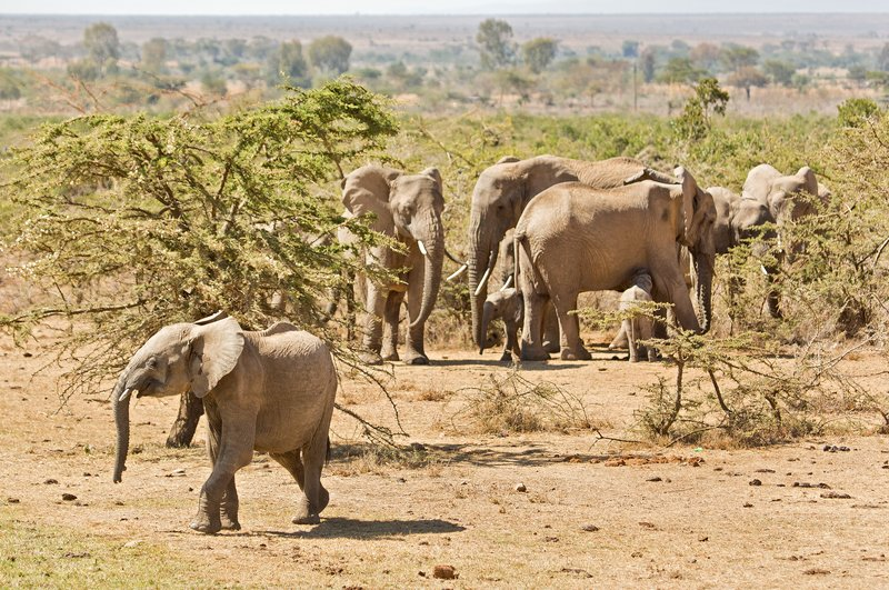 large_Elephants_305.jpg