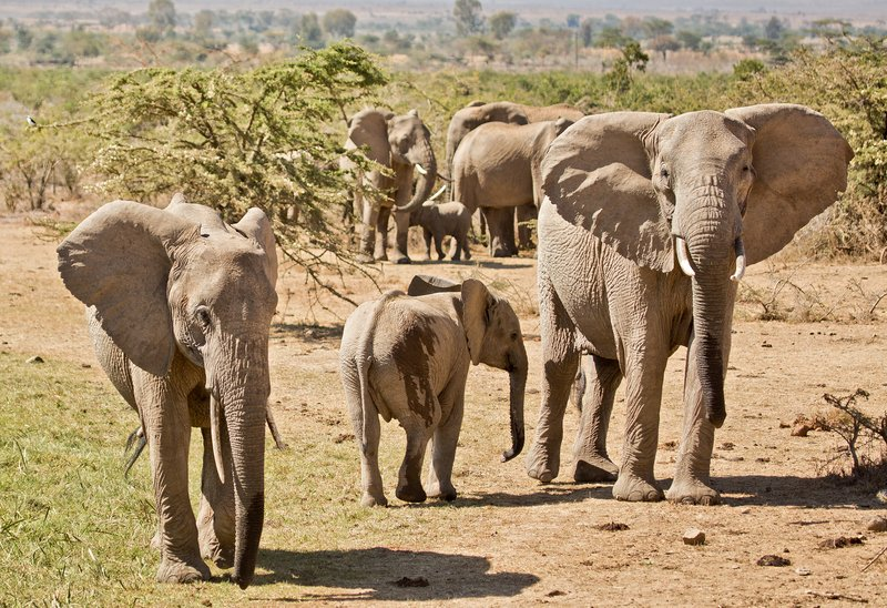 large_Elephants_309.jpg