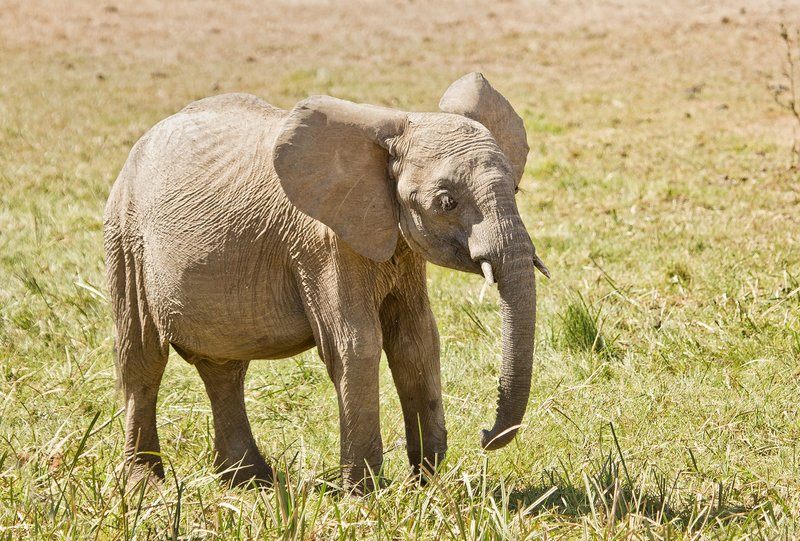 large_Elephants_315.jpg