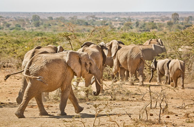large_Elephants_316.jpg