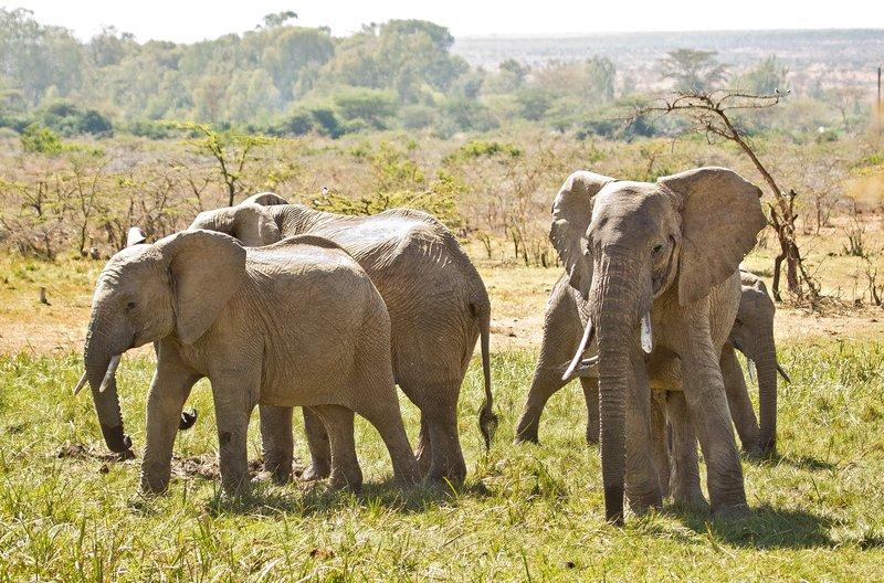 large_Elephants_318.jpg