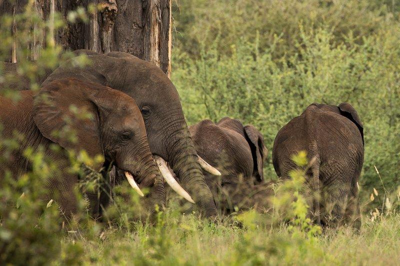 large_Elephants_32.jpg