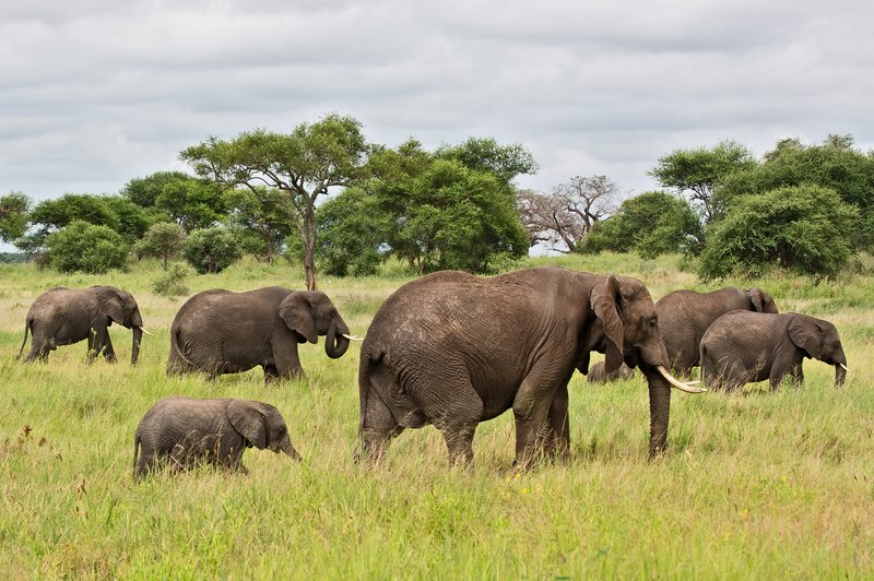 large_Elephants_5-16.jpg