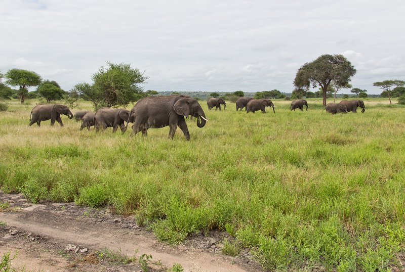 large_Elephants_5-19.jpg