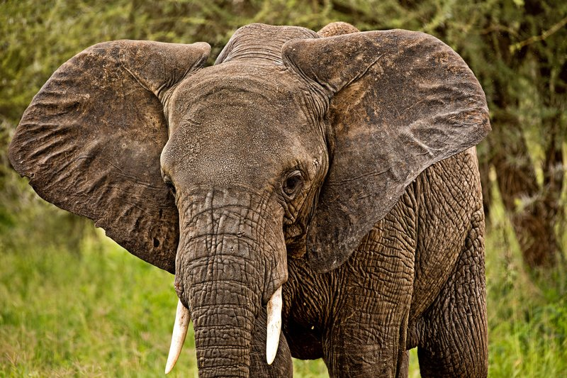 large_Elephants_53.jpg
