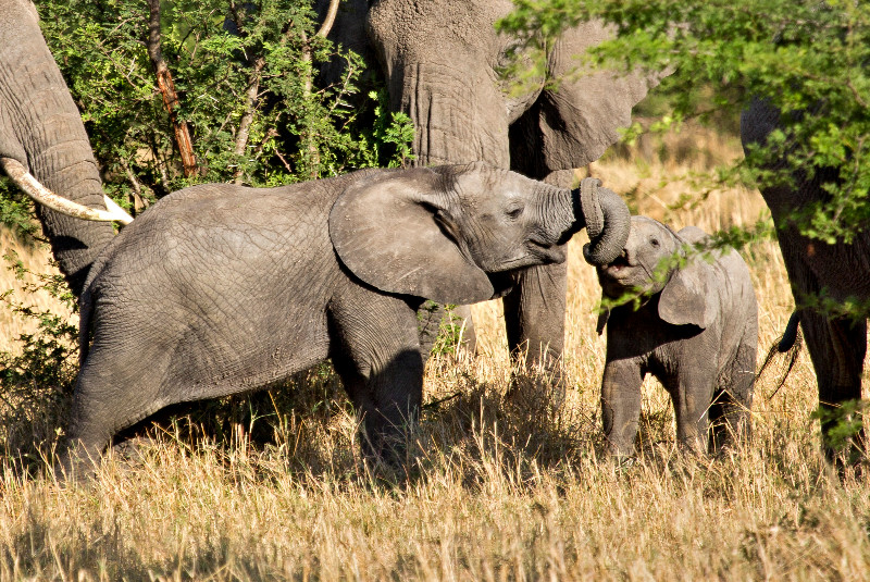 large_Elephants_63.jpg