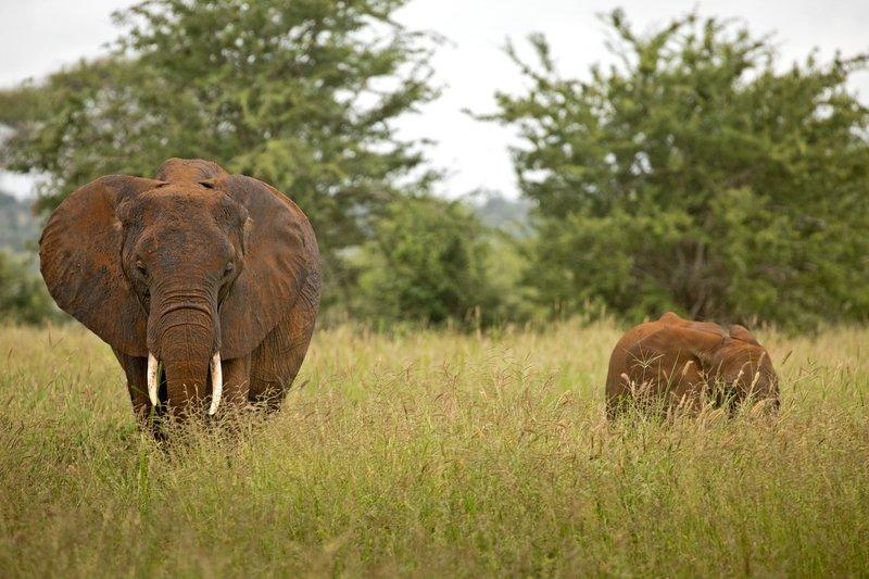 large_Elephants_66.jpg