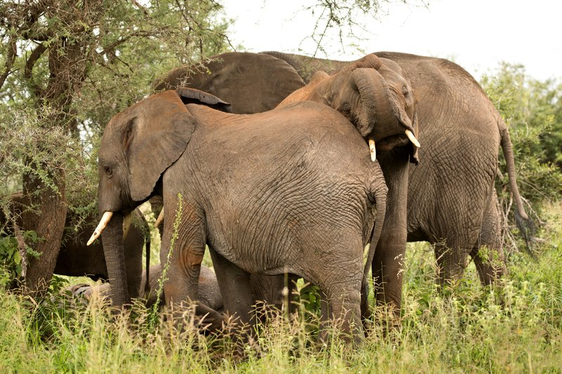 large_Elephants_701.jpg