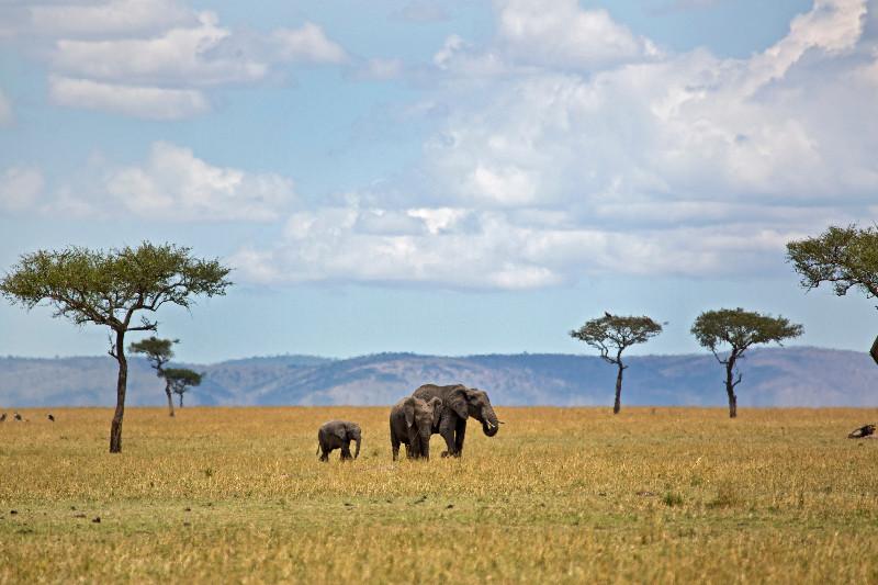 large_Elephants_71.jpg