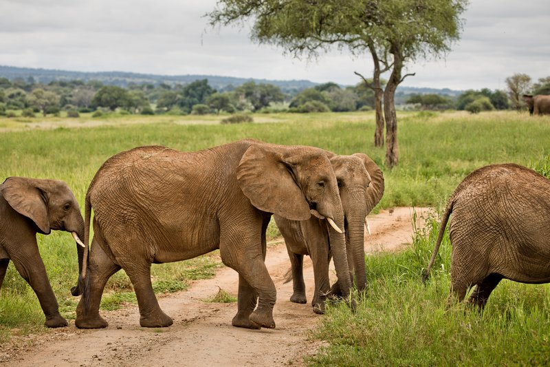 large_Elephants_722.jpg