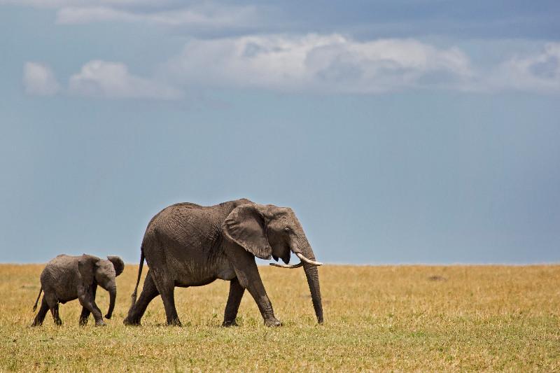 large_Elephants_74.jpg